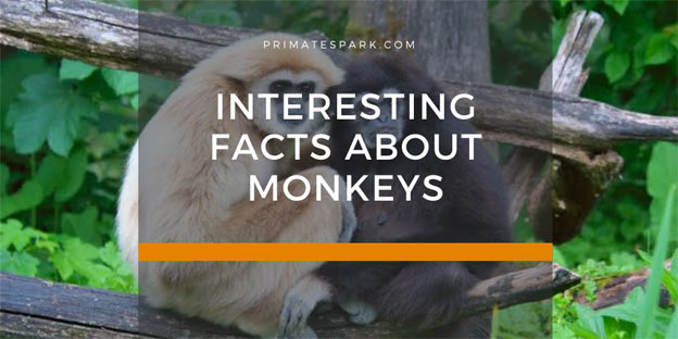 interesting facts about monkeys