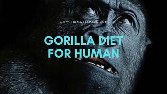 gorilla diet for human