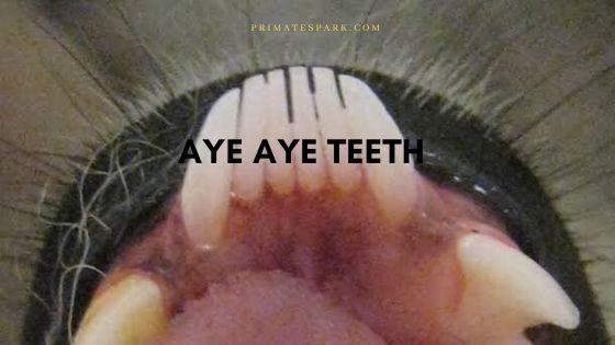 aye aye teeth