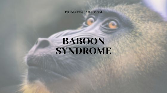 baboon syndrome