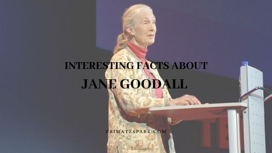 interesting facts about Jane Goodall